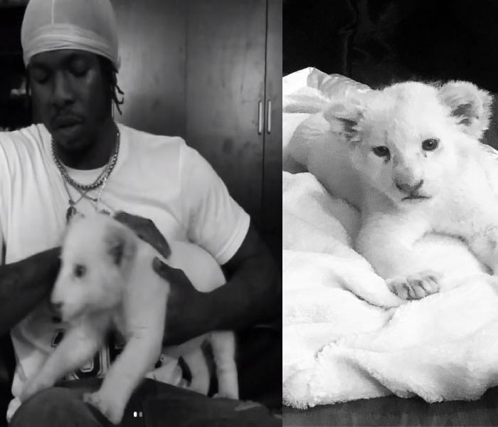 Fans, Davido, Simi and other celebs react after Runtown Buys Himself A Pet Lion