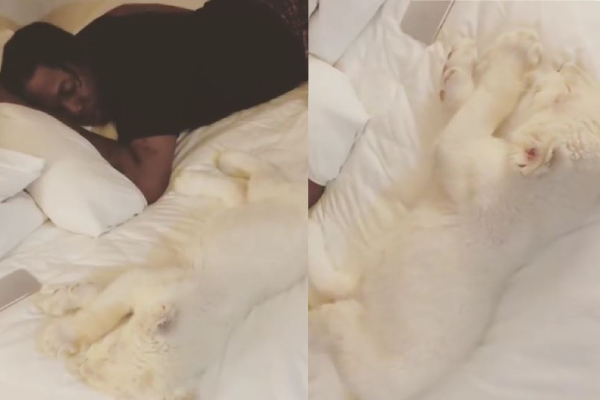 Run Town Celebrates Xmas with his pet Lion on bed, shares video